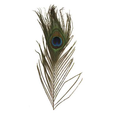 Plume de paon 25cm set de 3 rayher chez rougier pl - Plume de paon dessin ...