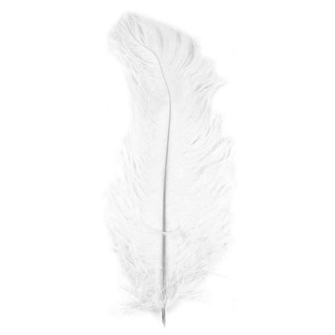 Plume d'autruche 30cm blanc
