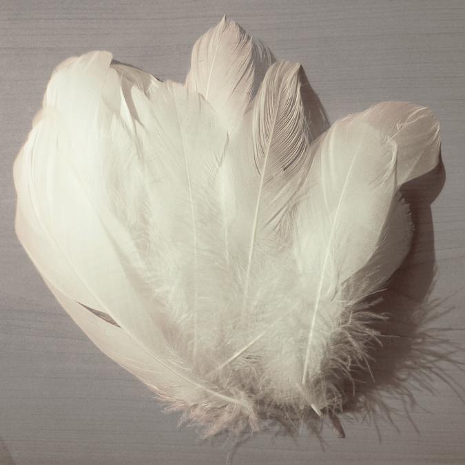 Plumes nageoire d'oie blanche 11,7 cm