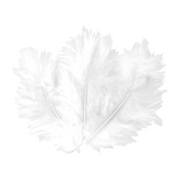 Plumes blanches 10 cm x 50