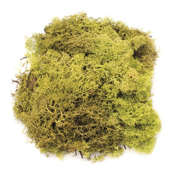 Mousse 50g vert clair