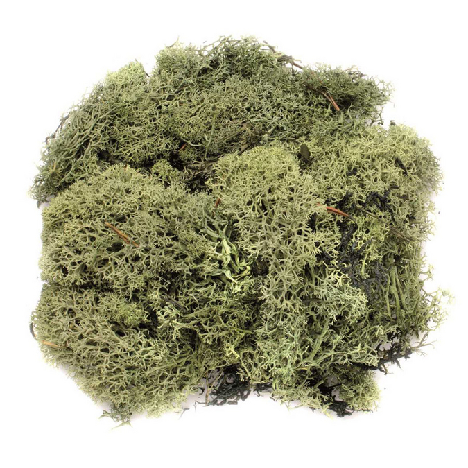 Mousse 50g vert foncé