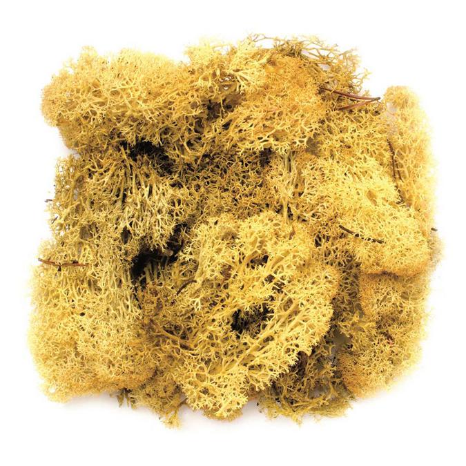 Mousse 50g jaune