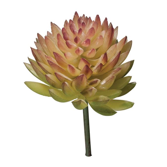 Mini-Succulent Echeveria 4,5 x 6 cm
