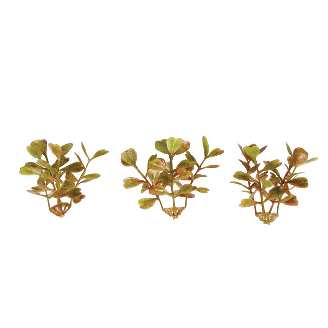 Mini-buis branches 4,5 cm - 12 pcs
