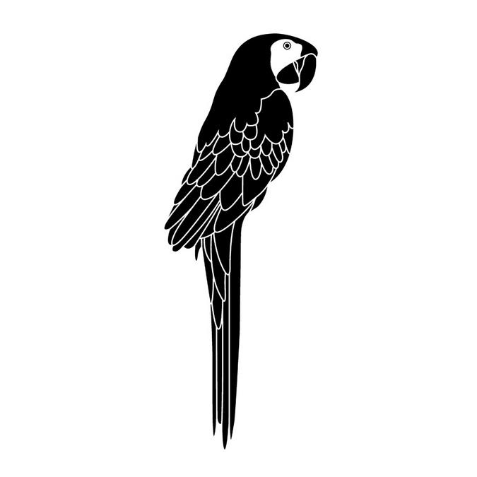 Tampon en bois perroquet 3,7 x 8,5 cm