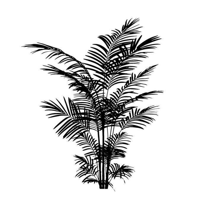 Tampon en bois fougère 5 x 6 cm