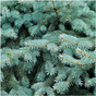 Papier Mint Wishes Fresh Pine 30 x 30 cm