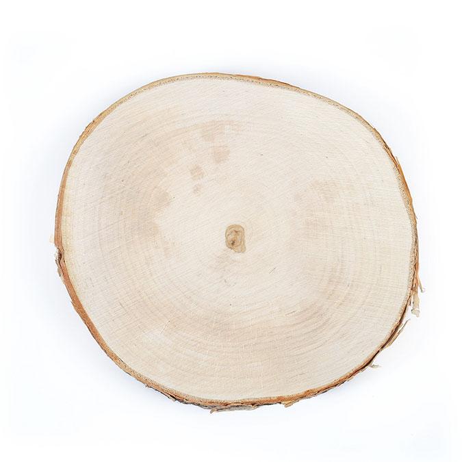 Tranche de bouleau Disque de 18 à 22 cm