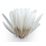 Plumes d'indien blanches 15 cm 10 g
