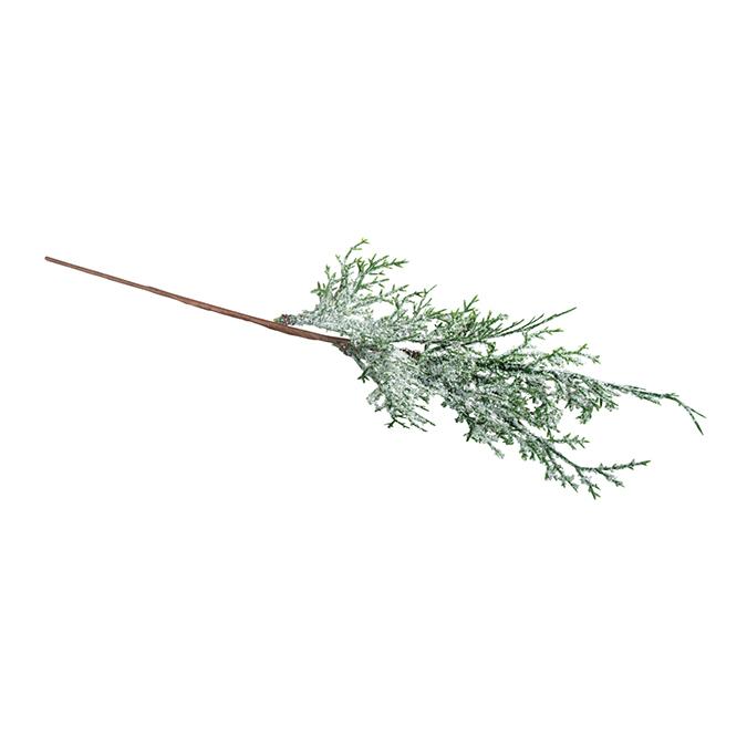 Branche de thuya enneigé