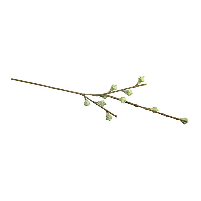 Branche de fruits d'eucalyptus