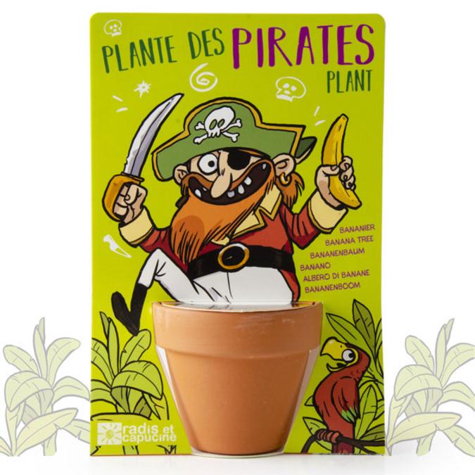 Pirate et son bananier des îles à semer